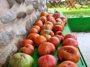 restaurante sostenible el bierzo km 0 huerto 5